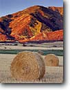 Stock photo. Caption: Rolled hay bales in autumn   below Wellsville Mountains Mendon,  Cache Valley Great Basin,  Utah -- united states america rural ranch ranching ranchland fall autumn pasture pastureland bountiful strength pastoral pastures field fields bale bales baled ranchlands pasturelands harvest harvested landscape landscapes clear blue skies sunny frosty cold scene