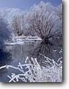 Stock photo. Caption: Hoarfrost on willows and grasses   below Wellsville Mountains Little Bear River, Cache Valley Great Basin,  Utah -- tranquil calm landscape landscapes  scenic scenics western west hoar frost cold winter scene white frozen icey freezing graceful interlude lake lakes refections reflection