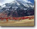 Stock photo. Caption: Bigtooth maples   below Wellsville Mountains Cache Valley Great Basin,  Utah -- tranquil calm landscape landscapes scenic scenics scenic scenics crops crop grain grains grainfields fields agriculture soft western west maple fall autumn color colors snow fresh snowfall foliage scarlet eternal excellence mountain
