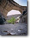 Stock photo. Caption: Sipapu Natural Bridge White Canyon Natural Bridges National Monument Colorado Plateau,  Utah -- monuments canyon canyons slickrock erosion arch arches natural rock country hiking destination destination strong strength window massive hole landscape landscapes scenics scenic looking through spring sunny indian sacred native american waterpockets