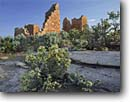 Stock photo. Caption: Stansbury cliffrose   and Hovenweep Castle Hovenweep National Monument Colorado Plateau,  Utah -- purshia mexicana stansburyana shrub shrubs sagebrush indian ruin ruins ancient civilization civilizations native american anasazi monuments construction building abandoned archeologic archeology mysterious site sites strength buildings sunny clear rock