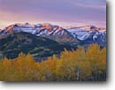 Stock photo. Caption: Aspens and Mt. Timpanogos Wasatch Range Uinta National Forest Utah -- united states america peak peaks  forests mountains landscape landscapes mountain autumn fall color uintas mount alpenglow color colors foliage crisp clear scenic scenics scene aspen tree trees