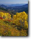 Stock photo. Caption: Aspens and view down Nebo Creek drainage Wasatch Range Uinta National Forest, Utah -- autumn united states america fall  backroads backroad travel leaves valley valleys foliage landscape landscapes scenic scene scenes sunny blue skies clear distance aspen tree trees uintas forests rockies mountains mountain color colour colourful colours