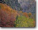 Stock photo. Caption: Fremont cottonwood and bigtooth maples Zion Canyon Zion National Park Colorado Plateau,  Utah -- tree trees sandstone fall autumn country parks redrock landscape landscapes tourist travel destination destinations solitude deserts desert color navajo cottonwoods walls wall foliage scenic scenics time vista  views view vistas cloudy deep canyons