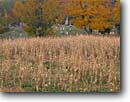 Stock photo. Caption: Cornfields, sugar maples and graveyard Cabot Washington County Vermont,  New England -- east country countryside autumn fall trees destination travel north northeast colors color maple leaf landscapes rural peace peaceful graves cemetery maple grave yard cemeterys cemeteries burial grounds ground foliage peace rest stones stone harvest