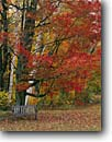 Stock photo. Caption: Twin Ponds Farm West River Valley Vermont New England -- autumn nostalgia nostalgic northeast northeastern united states restful fall inviting peaceful harmony hope backroads backroad travel leaves bench benches family restful path pathway landscape landscapes scenics scenic scenes rest places relaxing relax
