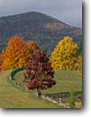 Stock photo. Caption: Red maples Blue Ridge Parkway Blue Ridge Mountains Virginia -- maple tree trees fence fences split rail rails mountain fall autumn parkways america pastoral pasture pastures appalachia appalachian bucolic foliage balance balanced fields open landscape landscapes scenics scenic vista vistas view views