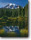 Stock photo. Caption: Mt. Rainier  from Reflection Lakes Mt. Rainier National Park Cascade Range, Washington -- peak pond ponds tarn tarns tranquil parks mountains ponds lake mountain reflections volcano volcanos volcanoes ranges balance landscape landscapes tourist travel destination destinations fall autumn scenic scenics sunny blue skies clear perfect