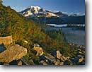 Stock photo. Caption: Mountain-ash and Mt. Rainier    from The Bench Mt. Rainier National Park Cascade Range, Washington -- united states america peak tranquil parks mountains mountain peaks volcano volcanos volcanoes ranges balance landscape landscapes tourist travel destination destinations fall autumn color color mist cascades scenic native plants wild plant sunny clear
