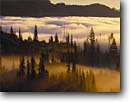Stock photo. Caption: Fog in Stevens Canyon   from the Bench Mt. Rainier National Park Cascade Range, Washington -- clouds foggy tree trees mist misty fall autumn canyons park pacific northwest united states america ranges mount serenity calm landscape landscapes artistic nature moody wild eternal solitude time pristine transitory emotion patience pretty shafts light