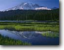 Stock photo. Caption: Mt. Rainier  from Reflection Lakes Mt. Rainier National Park Cascade Range, Washington -- peak snow reflection pond tranquil parks mountains ponds lake mountain peaks reflections volcano volcanos volcanoes ranges balance landscape landscapes tourist destination destinations summer cascades glacier reflection sunny clear blue skies snow calm