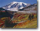 Stock photo. Caption: Mount Rainier from Paradise Park Mount Rainier National Park Cascade Range Washington -- parks united states america destination travel tourist destinations backcountry snow cascades glacier glaciers erosion mount volcano volcanoes extinct fall autumn color colors timberline alpine subalpine