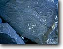 Stock photo. Caption: Orca petroglyphs Neah Bay Olympic National Park Olympic Peninsula,  Washington -- petroglyph native american rock  parks united states america ancient civilization civilizations indian indians killer whale whales orcas communication mysterious carving world heritage site sites glyph glyphs olympics depiction local animals animal