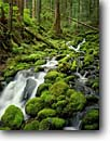 Stock photo. Caption: Creek on the way   to Sol Duc Falls Olympic National Park Olympic Peninsula, Washington -- vacation world heritage site sites parks rivers western landscape landscapes tourist travel destination destinations pacific northwest rainforest rainforests temperate mossy creeks clean fresh wild moss covered boulders soleduck eternal weathered