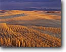 Stock photo. Caption: Wheat stubble at sunset   near Garfield The Palouse Washington -- united states ranch ranching lines linear mowed grains fields field artistic nature planted farm farming farmland farmlands ranch ranches ranching agriculture spring mountain mountains harvest harvesting planted field fields landscape landscapes grain
