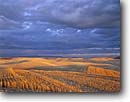 Stock photo. Caption: Wheat stubble at sunset   near Garfield The Palouse Washington -- united states ranch ranching  lines linear mowed grains fields field planted hay farm farms farming farmland farmlands ranch ranches ranching agriculture spring mountain mountains harvest harvesting grain landscape landscapes scenic scenes clouds