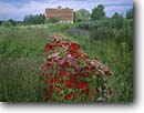Stock photo. Caption: Blue Vista Farm Bayfield Bayfield County Wisconsin -- america tourist travel destination destinations landscape landscapes scenic scenics byway byways backroads backroad sunny clear blue skies summer flowers flower barn barns cultivation ornamental carnations carnation farms summer rural