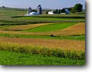 Stock photo. Caption: Cornfields and farm near Cobb Iowa County Wisconsin -- cornfield field fields barn barns silo silos farmhouse farmhouses great plains farms agriculture corn fall Autumn soybean soybeans crop crops sunny clear blue skies harvest harvests bontiful rural family landscape landscapes scenic scenics growing food