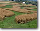 Stock photo. Caption: Corn crop Farm on Military Ridge Grant County Wisconsin -- upper midwest midwestern united states america landscape landscapes scenic scenics autumn fall crops farms growing food plowed mowed maze barn barns ranch ranchlands harvest harvested