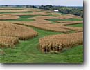 Stock photo. Caption: Corn crop Farm on Military Ridge Grant County Wisconsin -- upper midwest midwestern united states america landscape landscapes scenic scenics autumn fall crops farms growing food plowed mowed maze barn barns ranch ranchlands harvest harvested clear sunny green
