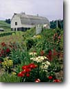 Stock photo. Caption: Farm and barn Trempealeau County Wisconsin -- america tourist travel destination destinations landscape landscapes scenic scenics byway byways backroads backroad summer flowers flower barns cultivation ornamental farms summer rural garden gardens pastoral country living family