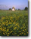 Stock photo. Caption: Birdsfoot trefoil and windmill (1904)   at sunset Douglas County Wisconsin -- landscape landscapes scenics scenic united states america windmills alternative green energy power denmark historical historic building buildings blades blade working flowers flower country rural generation generating nostalgic wind mills capturing mill