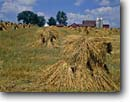 Stock photo. Caption: Oat shocks Amish farm Vernon County Wisconsin -- americana nostalgic nostalgia united states building buildings landscape landscapes scenic scenics american farms crops crop houses houses barn barns silo silos harvest harvesting agriculture midwest midwestern family mennonite fashioned traditional