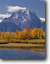 Stock photo. Caption: Aspens at Oxbow Bend Snake River and Mount Moran Grand Teton National Park Rocky Mountains,  Wyoming -- world heritage site sites fall autumn rockies peaks mountain glacial parks landscape landscapes tourist travel destination destinations tree trees color colors tetons rivers meandering rockies peaceful balance range classic scenics scenes famous overlooks