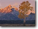Stock photo. Caption: Aspens and the Grand Teton   from the Snake River Valley Grand Teton National Park Rocky Mountains,  Wyoming -- world heritage site sites fall autumn rockies peaks mountain glacial parks landscape landscapes tourist travel destination destinations tree trees color colors tetons rivers meandering rockies peaceful balance range classic scenics scenes famous overlooks