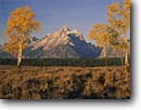 Stock photo. Caption: Aspens in Snake River Valley   and the Grand Teton,  Teton Range Grand Teton National Park Rocky Mountains,  Wyoming -- america peak aspen fall autumn color colors range parks ranges peaks majestic landscape landscapes strength tourist travel vacation destination destinations tetons rockies balanced balance world heritage site sites sunny clear blue skies solitude scenics