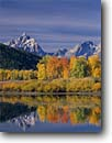 Stock photo. Caption: Aspens at Oxbow Bend Snake River and the Grand Teton Grand Teton National Park Rocky Mountains,  Wyoming -- world heritage site sites fall autumn rockies peaks mountain glacial parks landscape landscapes tourist travel destination destinations iconic color colors tetons rivers peaceful balance range classic scenics scenes overlooks reflection reflections