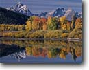 Stock photo. Caption: Aspens at Oxbow Bend,  Snake River   and the Grand Teton,  Teton Range Grand Teton National Park Rocky Mountains,  Wyoming -- peak aspen fall autumn color colors range parks trees tree ranges peaks majestic landscape landscapes tourist travel vacation destination destinations tetons rockies crisp clear serenity serene colour colours golden world heritage site sites sunny clear