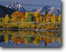 Stock photo. Caption: Aspens at Oxbow Bend Snake River and the Grand Teton Grand Teton National Park Rocky Mountains,  Wyoming -- peak aspen fall autumn range parks trees tree ranges peaks majestic landscape landscapes tourist travel destination destinations tetons rockies crisp clear serenity serene golden foliage reflection reflections classic scenics scenes scenic calm quiet