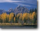 Stock photo. Caption: Snake River at Deadmans Bar   and the Grand Teton,  Teton Range Grand Teton National Park Rocky Mountains,  Wyoming -- rivers fall autumn aspens spruce spruces peak peaks ranges parks outdoor recreation landscape landscapes travel tourist destination family vacation golden world heritage site sites color sunny clear blue skies fishing stream classic scenes scenics scenic