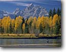 Stock photo. Caption: Flyfishing, Snake River at Deadmans Bar    and the Grand Teton Grand Teton National Park Rocky Mountains,  Wyoming -- rivers fall autumn aspens spruce peak peaks ranges parks outdoor recreation landscape landscapes travel tourist destination family world heritage site sites color sunny clear blue skies fishing stream classic scenes scenics scenic fisherman anglers stream