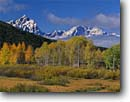 Stock photo. Caption: Aspens, Grand Teton and Teton Range   from near Oxbow Bend Snake River Valley Grand Teton National Park Rocky Mountains,  Wyoming -- snow peak aspens fall autumn color colors parks aspen trees tree ranges peaks majestic landscape landscapes strength tourist travel destination destinations rockies tetons jagged sagebrush glacial clear sunny blue skies heritage site sites world scenics
