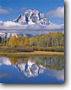 Stock photo. Caption: Aspens and Mt. Moran from Oxbow Bend Snake River Valley Grand Teton National Park Rocky Mountains,  Wyoming -- snow peak fall autumn color colors range parks aspen trees tree ranges peaks mountain majestic landscape landscapes strength tourist travel destination destinations reflection reflections tranquil calm tetons heritage site sites world sunny blue clear