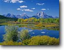 Stock photo. Caption: Willows and aspens at Oxbow Bend Snake River and Mt. Moran Grand Teton National Park Rocky Mountains,  Wyoming -- ranges united states peak peaks alpine tundra  parks mountain parks mount fall autumn crisp clear stunning rivers riparian habitat blue skies sunny scenic scene views view clean landscape landscapes sweet beautiful tetons calm quiet places
