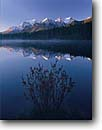 Stock photo. Caption: Dwarf birch on shore of Herbert Lake   and the Bow Range Banff  National Park,  Rocky Mountains Alberta,  Canada -- blue fall autumn tree trees lakes world heritage site parks mountain canadian rockies landscape landscapes tourist destination destinations peak peaks birches tranquil reflection reflections calm placid tranquil birches wisdom calming patience scenics