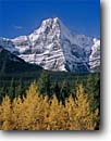 Stock photo. Caption: Black cottonwoods and Howse Peak Icefields Parkway near Waterfowl Lakes Banff National Park, Rocky Mountains Alberta, Canada -- glacial fall autumn tree trees world heritage site parks mountain canadian rockies landscape landscapes tourist destination destinations powder peaks conifers evergreen pristine crisp clarity purity pure travel sites snow capped clean sunny clear blue