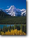 Stock photo. Caption: Black cottonwoods,  Waterfowl Lakes   and Howse Peak,  Icefields Parkway Banff  National Park,  Rocky Mountains Alberta,  Canada -- aqua blue glacial silt fall autumn tree trees lakes world heritage site parks mountain canadian rockies landscape landscapes tourist destination destinations snow peak peaks conifers evergreen pristine crisp clarity purity pure travel sunny clear balanced