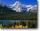 Stock photo. Caption: Black cottonwoods, Waterfowl Lakes  and Howse Peak, Icefields Parkway  Banff National Park, Rocky Mountains Alberta, Canada -- aqua blue glacial silt fall autumn tree trees lakes world heritage site parks mountain canadian rockies landscape landscapes tourist destination destinations snow peaks conifers evergreen pristine crisp clarity purity pure travel clean clear sunny fresh