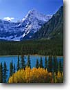 Stock photo. Caption: Black cottonwoods,  Waterfowl Lakes   and Howse Peak,  Icefields Parkway Banff  National Park,  Rocky Mountains Alberta,  Canada -- aqua blue glacial silt fall autumn tree trees lakes world heritage site parks mountain canadian rockies landscape landscapes tourist destination destinations powder attraction attractions peak peaks conifers evergreen azure sunny clear snow fresh stunning