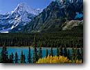 Stock photo. Caption: Black cottonwoods,  Waterfowl Lakes   and Howse Peak,  Icefields Parkway Banff  National Park,  Rocky Mountains Alberta,  Canada -- aqua blue glacial silt fall autumn tree trees lakes world heritage site parks mountain canadian rockies landscape landscapes tourist destination destinations silty attraction attractions peaks conifers evergreen sunny clear azure snow fresh majestic crisp