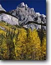 Stock photo. Caption: Black cottonwoods and Wilson Peak Icefields Parkway,  Banff National Park Rocky Mountains Alberta,  Canada -- fall autumn tree trees lakes world heritage site sites parks mountain canadian rockies landscape landscapes tourist destination destinations attraction attractions peak peaks colour colours color color sunny clear blue skies rugged solid strong foliage
