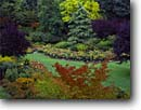 Stock photo. Caption: Sunken Garden The Butchart Gardens Victoria,  Vancouver Island British Columbia,  Canada -- formal public flowers walkway path paths pathway pathways flower fall autumn walkways manicured canadian landscaping gardening floral travel destination destinations tourist tour attraction attractions colorful sweet peace peaceful foliage landscaped