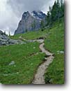 Stock photo. Caption: Opabin Lake Trail & Gunsight Peak Lake O