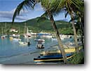 Stock photo. Caption: Coconut palms Cruz Bay St. John U. S. Virgin Islands -- bays saint caribbean tropical island destination destinations tourist harbor harbors harbour harbours sail boat boats vessel vessels pleasure craft protect protected united states protectorate travel palm vacation sunny warm leisure sailboat paradise