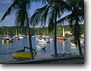 Stock photo. Caption: Coconut palms Cruz Bay St. John U.S. Virgin Islands -- bays saint caribbean tropical island destination destinations tourist harbor harbors harbour harbours sail boat boats vessel vessels pleasure craft protect protected united states protectorate travel palm vacation sunny warm leisure sailboat paradise