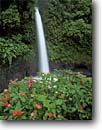 Stock photo. Caption: Impatiens & Peace Waterfall Peace River Central Volcanic Range Heredia Province, Costa Rica -- falls waterfalls flowers wildflower wildflowers tropical rainy central america impatien rivers eastern travel tourist destination destinations landscape landscapes dramatic large sweet rainforest rainforests landmarks landmark attraction attractions scene